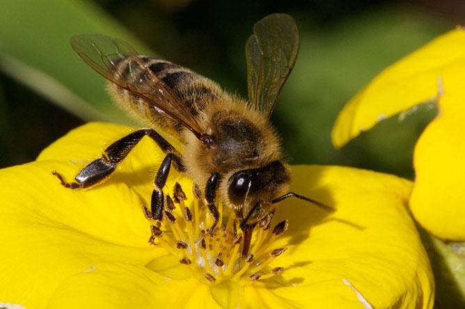 BEE KILLING PESTICIDES