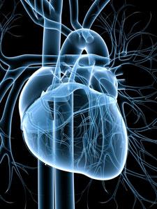 Coronary-Artery