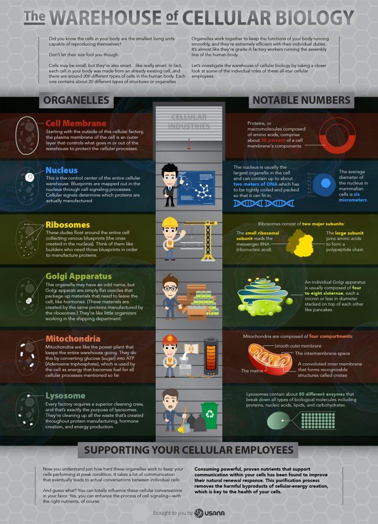Cell-Infographic-v2-EN