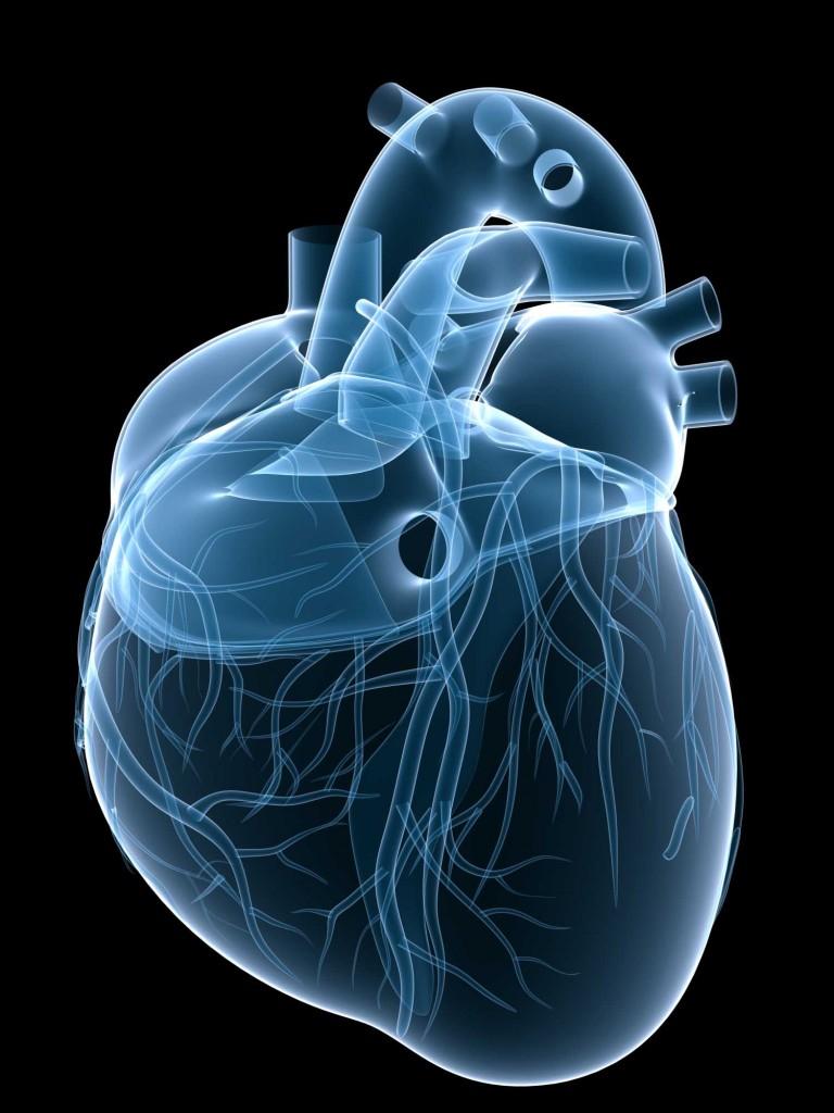 Heart-768x1024